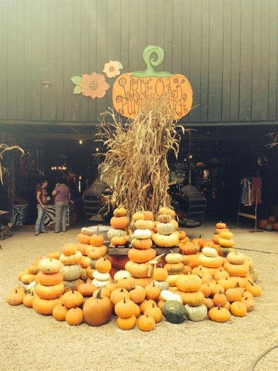 Return To White Oak Pumpkin Patch